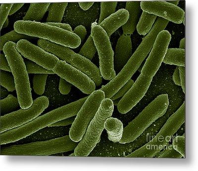 Escherichia Coli Bacteria, Sem Metal Print by Science Source