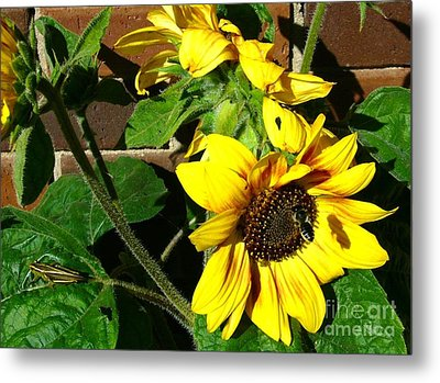 Metal Print featuring the photograph Everyone Loves Sunflowers by Jim Sauchyn