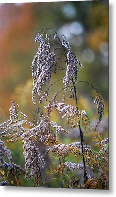 Fading Color Metal Print by Kimberly Deverell