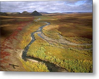 Fall Color On The Central North Slope Metal Print by Joel Sartore