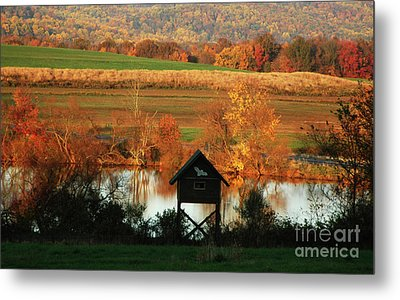 Fall Colors 1 Metal Print by Vilas Malankar