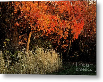Fall Colors 2 Metal Print by Vilas Malankar