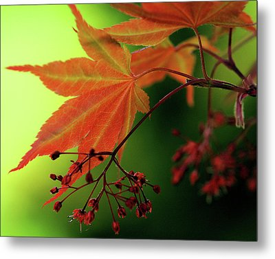 Metal Print featuring the photograph Fall Leaves by Michelle Joseph-Long