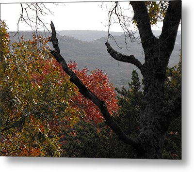 Fall Picture In Texas Metal Print by Rebecca Cearley