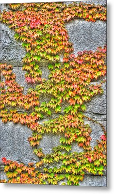 Metal Print featuring the photograph Fall Wall by Michael Frank Jr