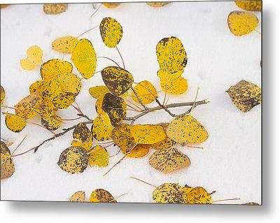 Fallen Autumn Aspen Leaves Metal Print by James BO  Insogna
