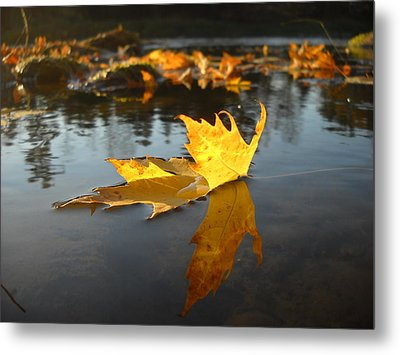 Fallen Maple Leaf Reflection Metal Print
