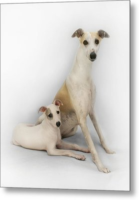 Father And Son Whippets Metal Print