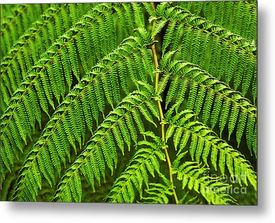 Fern Fronds Metal Print by Carlos Caetano