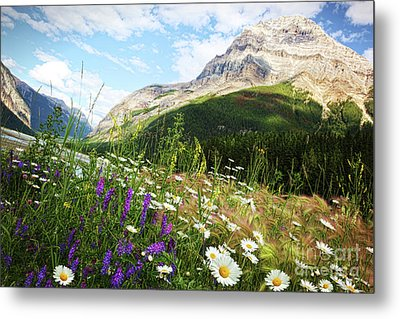 Field Of Daisies And Wild Flowers Metal Print by Sandra Cunningham