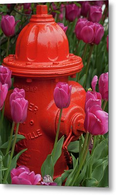 Fire Plug And Tulips Metal Print by Michael Flood