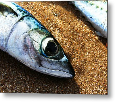 Fish Metal Print by Daniel Kulinski
