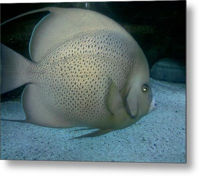 Fish In Motion Metal Print by Tammy Herrin