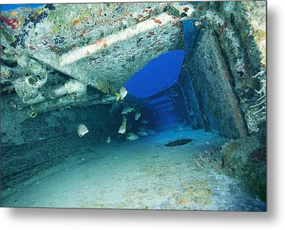 Fish Swimming In Shipwreck, Tortola Metal Print by Joe Stancampiano