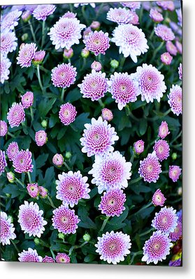 Fisheye Of Pink Flowers Metal Print by Malania Hammer