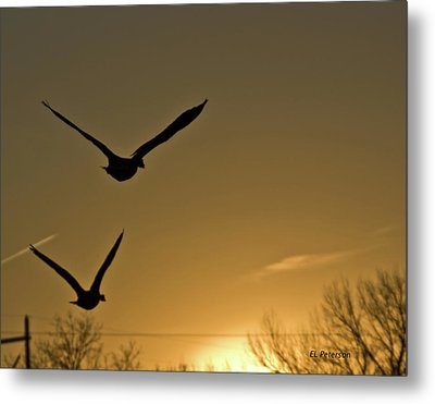 Flight At Sunset Metal Print by Edward Peterson