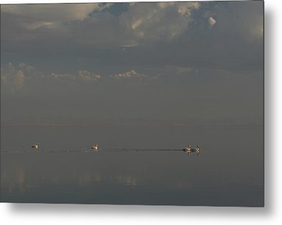 Floating Along Metal Print by Laurie Search