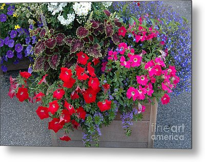 Flower Box Metal Print by Vilas Malankar