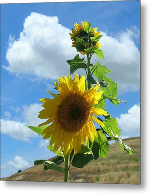 Metal Print featuring the photograph Flowers In The Sun by Bonnie Muir