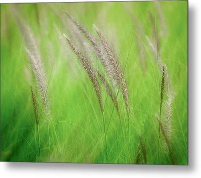 Flowing Reeds Metal Print