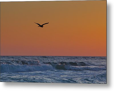 Fly By Metal Print by Charles Warren