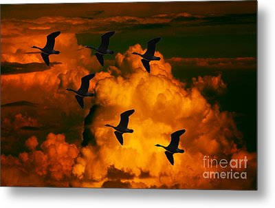 Flying High In The Sky Metal Print by Marjorie Imbeau