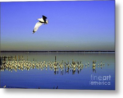 Metal Print featuring the photograph Flying Solo by Clayton Bruster