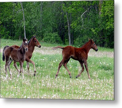 Foals In Dandelions Metal Print by Bruce Ritchie