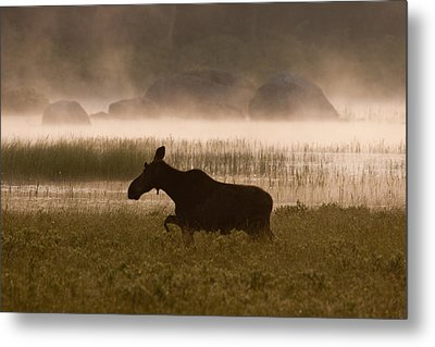 Foggy Stroll Metal Print by Brent L Ander