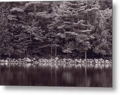 Forest At Jordan Pond Acadia Bw Metal Print