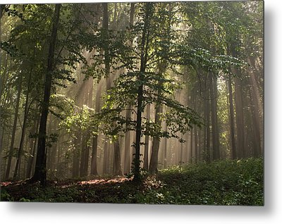 Forest Metal Print by Odon Czintos