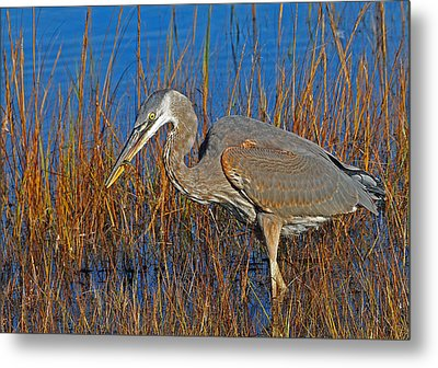 Metal Print featuring the photograph Found An Appetizer by Mike Martin