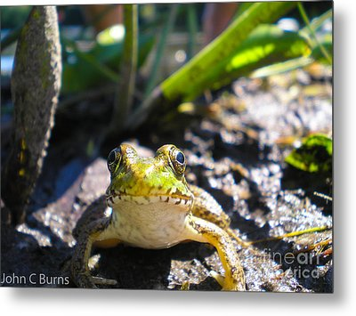 Metal Print featuring the photograph Frog Life by John Burns