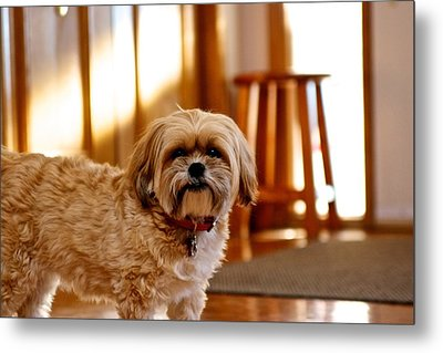 Metal Print featuring the photograph Ginger by JM Photography