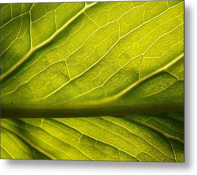 Metal Print featuring the photograph Going Green by Gerald Strine