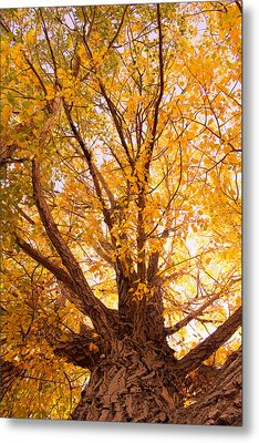 Golden Autumn View Metal Print by James BO  Insogna