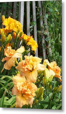 Golden Blossoms Metal Print by Sandy Collier