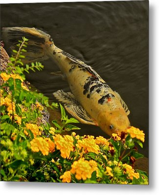 Metal Print featuring the photograph Golden Koi by Kirsten Giving