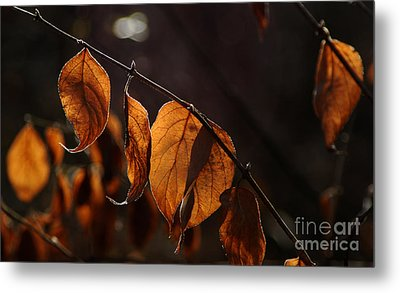Golden Leaves Metal Print by Vilas Malankar