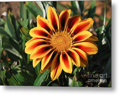 Metal Print featuring the photograph Gorgeous Beauty by Fotosas Photography