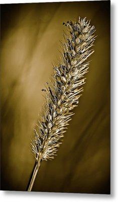 Grass Seedhead Metal Print by  Onyonet  Photo Studios