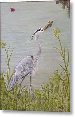 Great Blue Heron Metal Print by Jim Ziemer