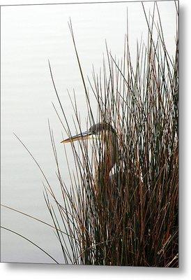 Great Blue Heron Metal Print by Kay Lovingood