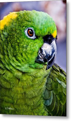 Green Parrot Metal Print by Christopher Holmes