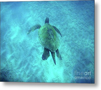 Green Sea Turtle 2 Metal Print by Bob Christopher