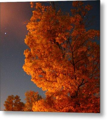 Green Tree At Night Metal Print by Devon Stewart