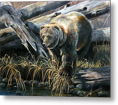 Grizzly Pond Metal Print by Scott Thompson