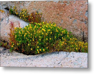Metal Print featuring the photograph Growing In The Cracks by Brent L Ander