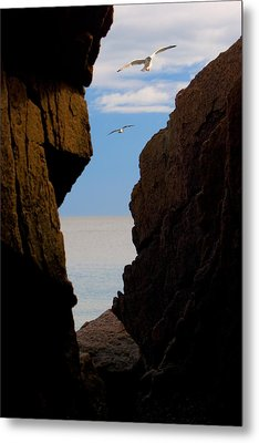 Metal Print featuring the photograph Gulls Of Acadia by Brent L Ander