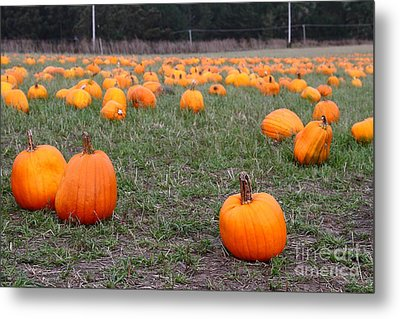 Halloween Pumpkin Patch 7d8383 Metal Print by Wingsdomain Art and Photography